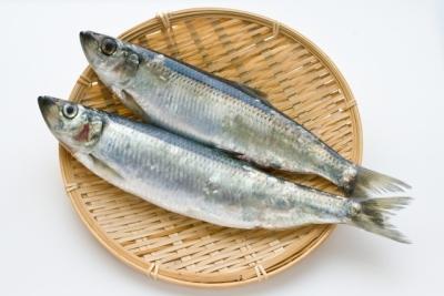お魚タイピング答えニシン