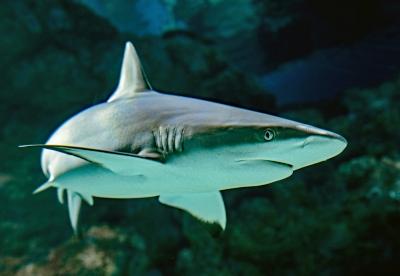 お魚タイピング答えサメ