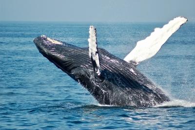 お魚タイピング答えクジラ